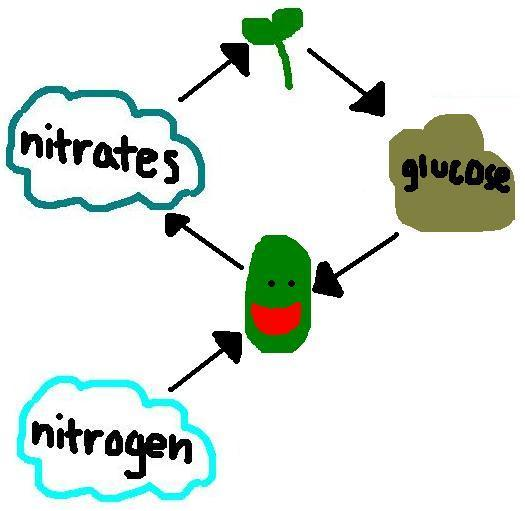 Rhizobia- Nature's Beneficial Bacteria / Beneficial-Properties